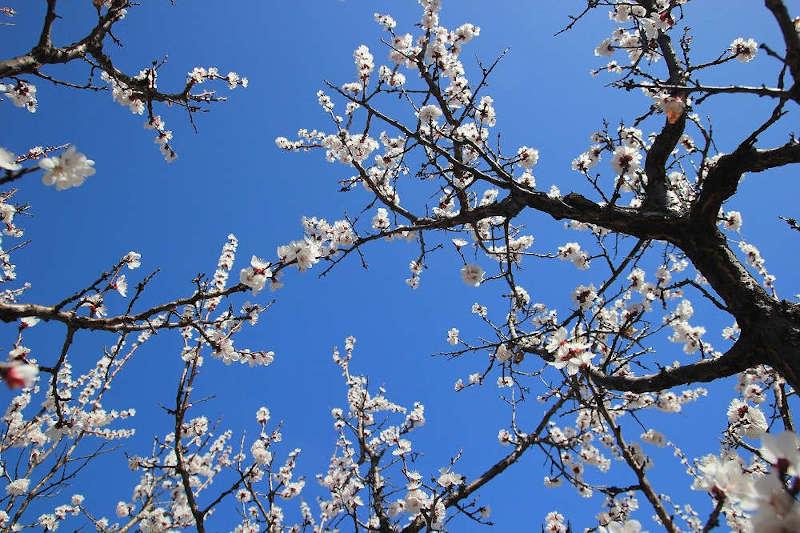 Offre d'emploi : Ouvrier – Ouvrière arboricole à Sarlande