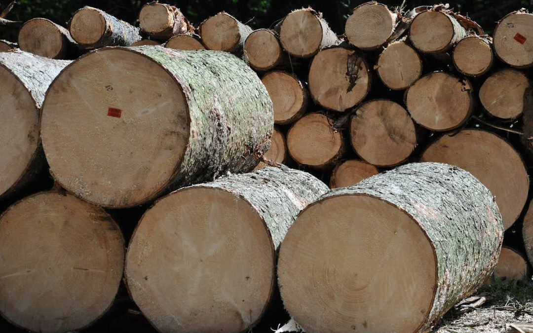 Offre emploi : Ouvrier de scierie à St Jory de Chalais