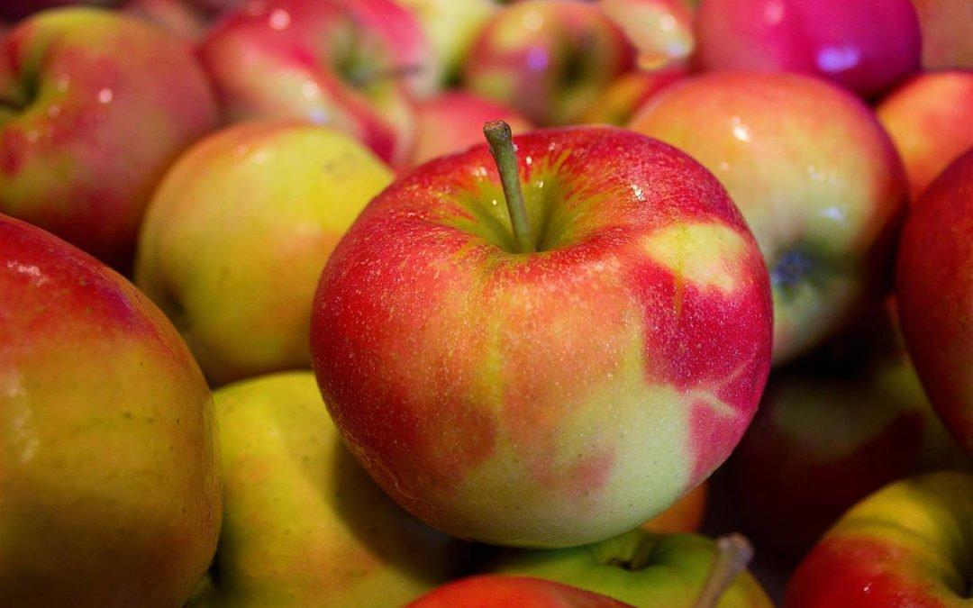 Lancement de la campagne de recrutement Collecte de pommes 2020