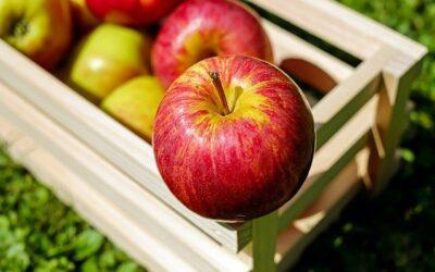 Emploi cueillette des pommes